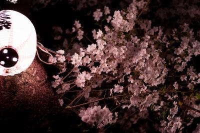 soku_35843.jpg :: 植物 花 桜 サクラ 夜桜 満開 西小山