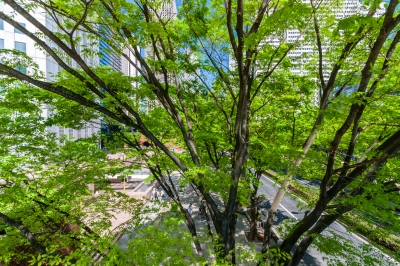 soku_35890.jpg :: 風景 街並み 都市の風景 ビル 公園 木 新宿