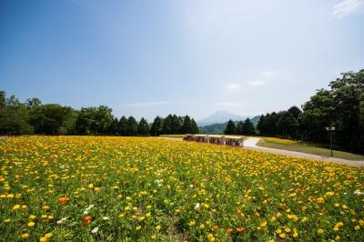 soku_35982.jpg :: 植物 花 黄色い花 風景 自然 草原 花畑