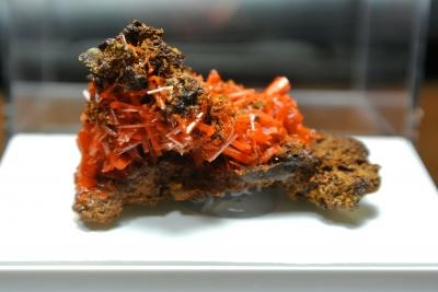 soku_36075.jpg :: クロコアイト(紅鉛鉱) オーストラリア/アデレード鉱山