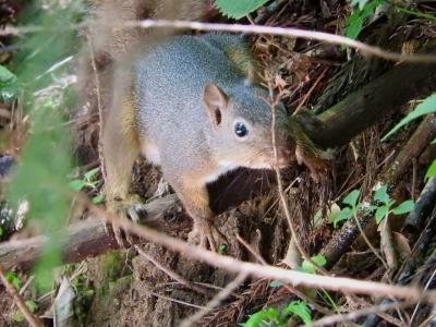 soku_36091.jpg :: りす 動物 哺乳類 栗鼠 リス