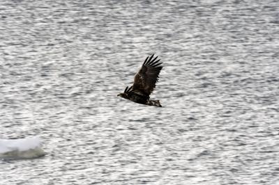 soku_36362.jpg :: 動物 鳥 猛禽類