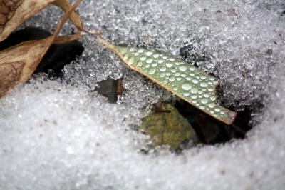 soku_36406.jpg :: 氷 笹