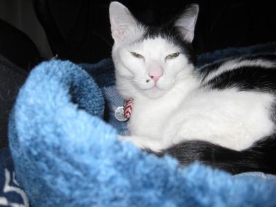 soku_36454.jpg :: 動物 哺乳類 猫 ネコ みゃーちゃん