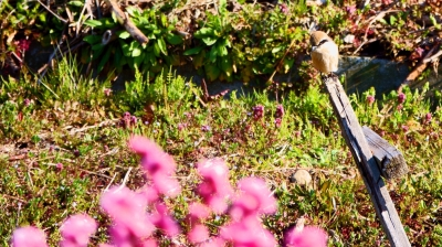 soku_36465.jpg :: 動物 鳥 野鳥 自然の鳥