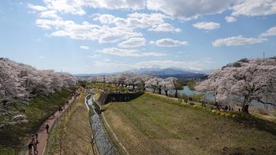 soku_36468.jpg :: 宮城県 一目千本桜
