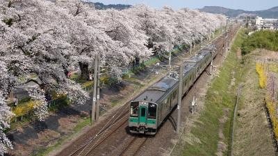 soku_36469.jpg :: 宮城県 一目千本桜