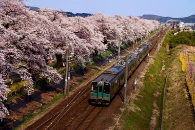 soku_36474.jpg :: 宮城県 一目千本桜
