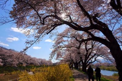 soku_36475.jpg :: 宮城県 一目千本桜