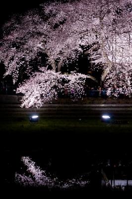 soku_36523.jpg :: 夜桜 水鏡 野川