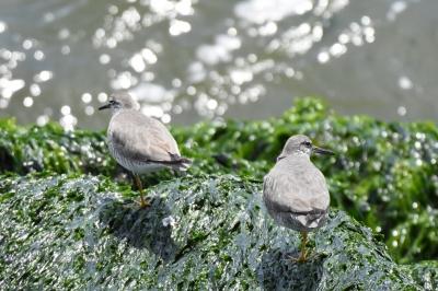 soku_36548.jpg :: 動物 鳥 野鳥 自然の鳥 小鳥